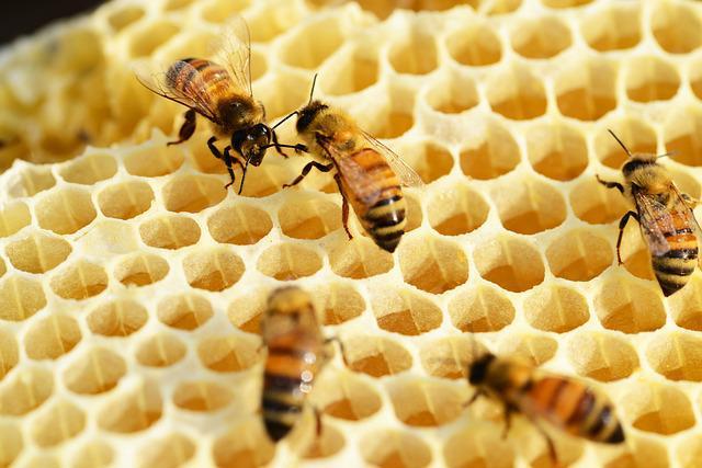 n1-SCI_NID d'abeilles