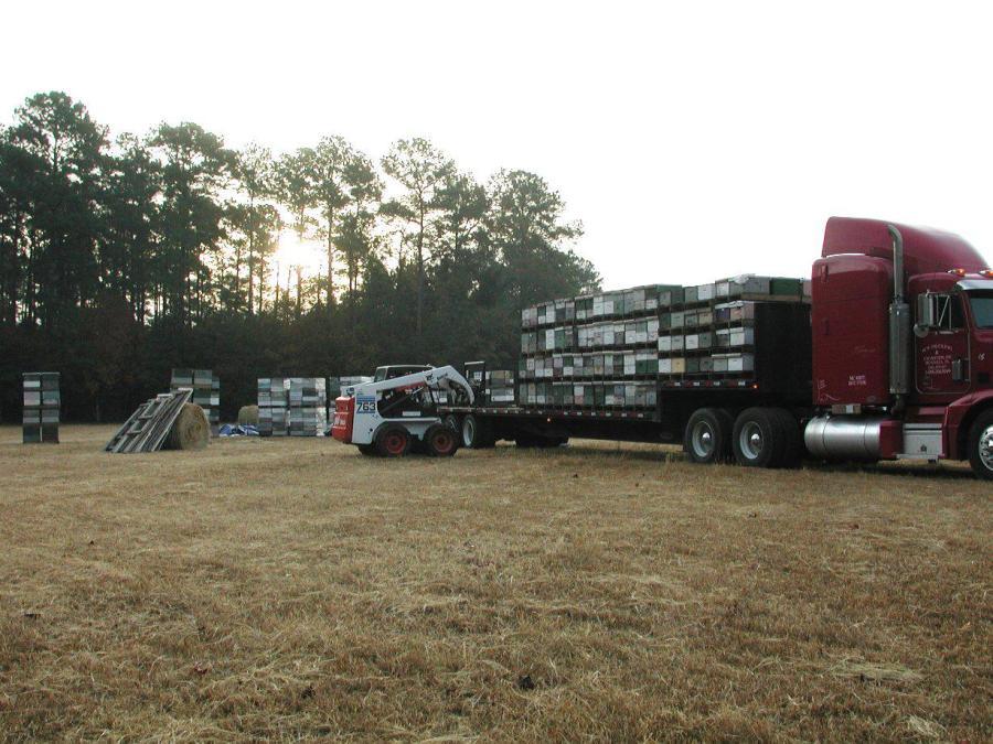 Aux États-Unis, chargement de ruchers itinérants pour les transporter de l'État de Caroline du Sud à celui du Maine.