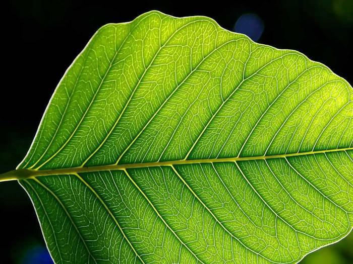 La photosynthèse, utilisation par les végétaux de l'énergie solaire, est l'exemple type de la néguentropie (création d'ordre, au contraire de l'entropie)