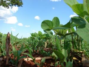 Divers acteurs s'emploient à diffuser des pratiques d'agriculture responsable, de non-labour ou encore de semis direct sous couvert