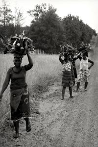 Trois heures par jour, c'est le temps que, en moyenne, les femmes de certains pays doivent consacrer à se procurer de l'énergie bois.