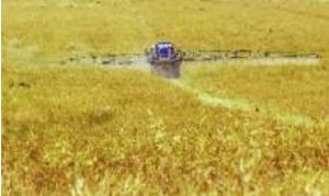 Pour réduire l'utilisation de pesticides, il faut différencier et séparer ceux qui conseillent les agriculteurs dans leur choix et ceux qui leur vendent des pesticides.