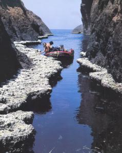 Figure 1. Le trottoir à Lithophyllum byssoides de Cala Litizia (réserve naturelle de Scàndula, Corse), dans les années 1980 : il mesurait 2 m de large. Cet écosystème étonnant, où des espèces marines côtoient des espèces terrestres, est spécifique à la Méditerranée.