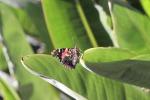n54-butterfly-1148840_960_720