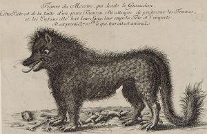 Le monstre qui a désolé le Gévaudan (gravure sur cuivre, 1764-1765). R
