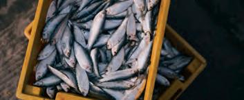 La pêche : un grand gâchis